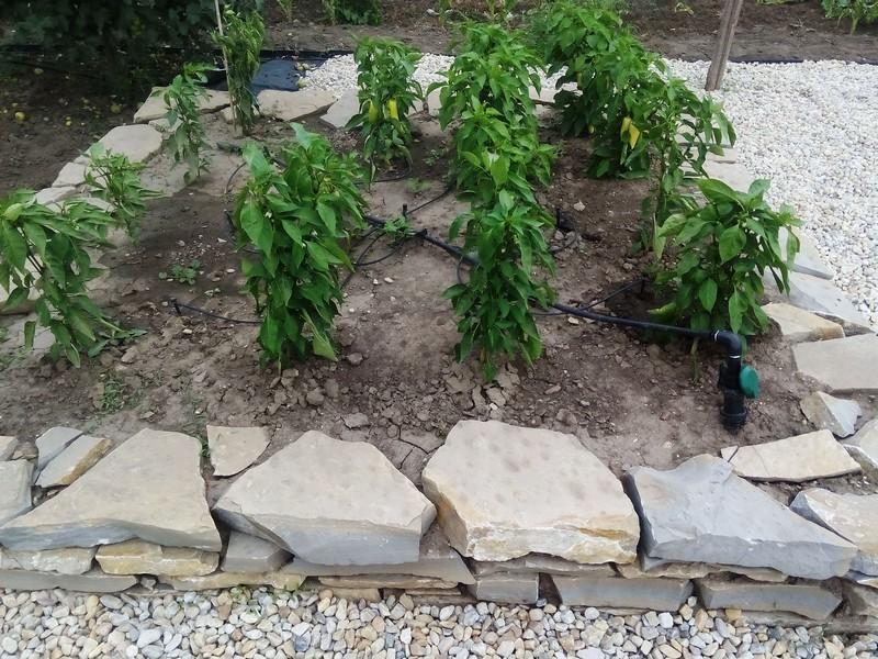 12 Zavlaha K Zelenine Pocas Sezony